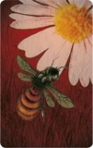 pollen_zoom_carte4