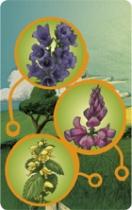 pollen_zoom_cartes2