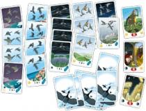cartes migrato